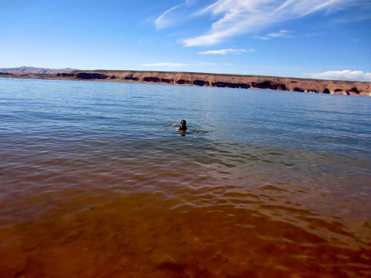 lake-powell-swimming