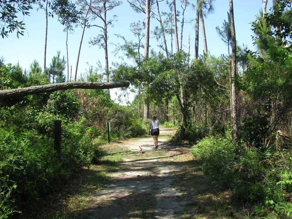 dauphin-island-campground-beach-trail