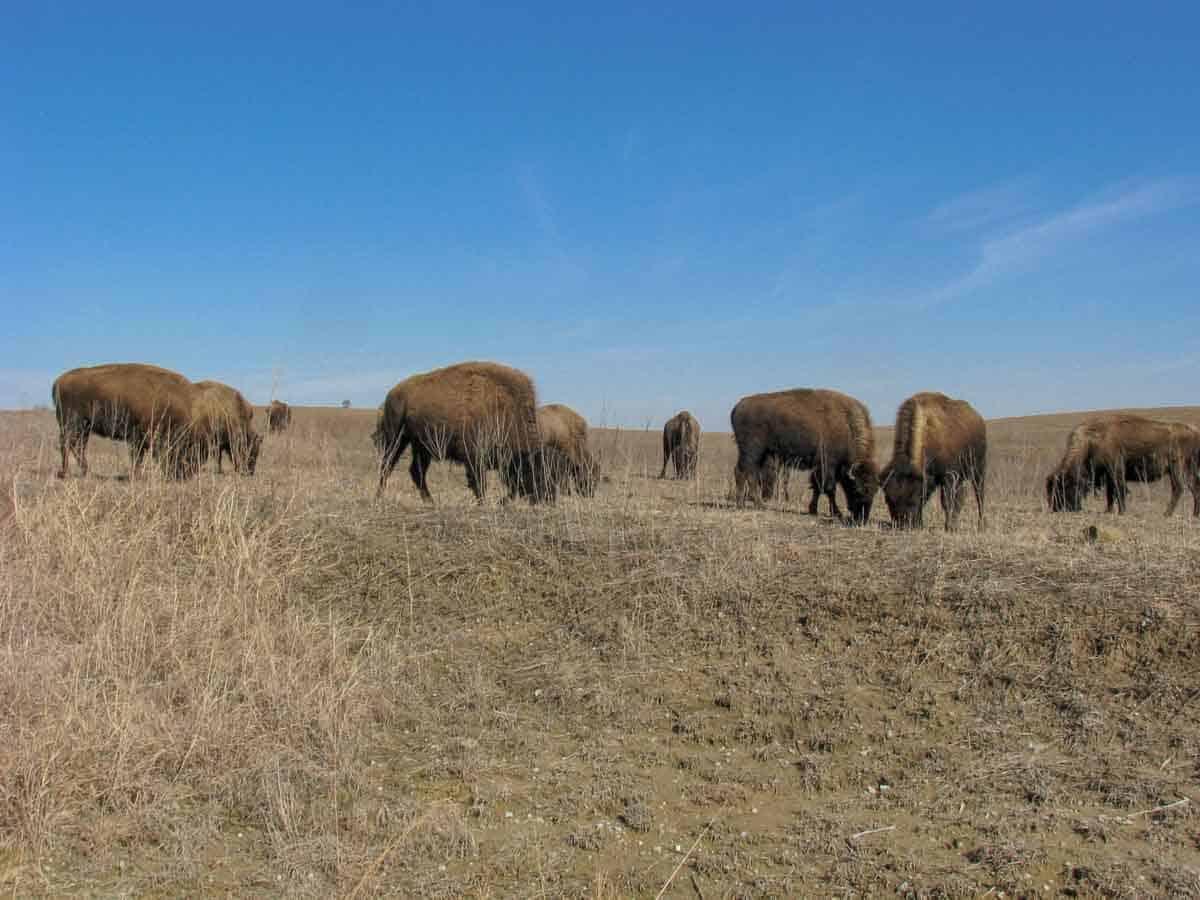road-trips-from-tulsa-oklahoma-buffalo